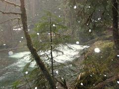 snowfalling_04_02_11