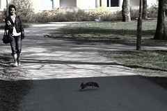 The Squirrel is back