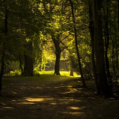 Enchanted by Shadows and Light