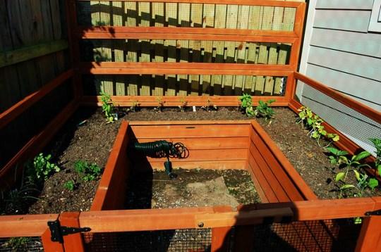 Backyard Botanical Oasis Garden - week 1