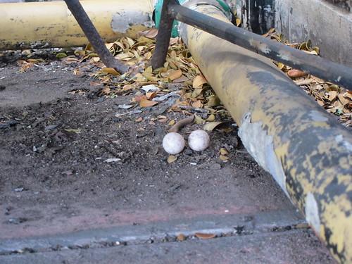 boid eggs by bursky