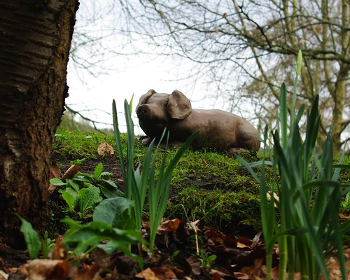 20110227-37_Piglet in the daffs by gary.hadden