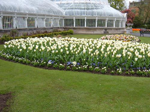 The Palm House, Botanic Gardens, Belfast