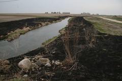 creek, immediately post-burn