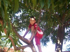 Mikey's Tree