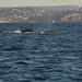 26 whale