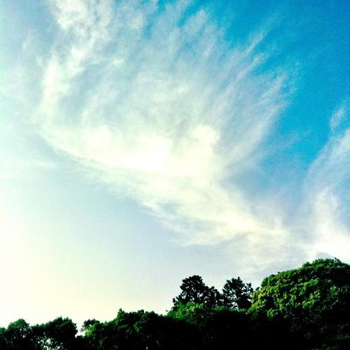 天使の羽? #sky