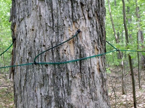 Sap Tree