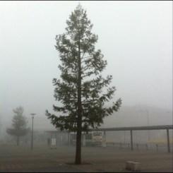 今朝は霧がすごかったですぅ~(フィルター無し)!
