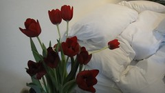 Red Tulips and Bed with White Pillows