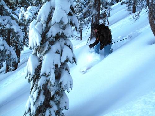 Tree skiing is fun!