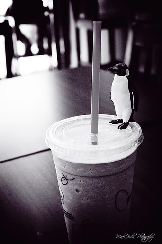 Even penguins need frozen drinks
