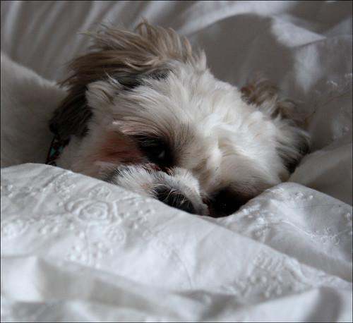 I'm so comfy...