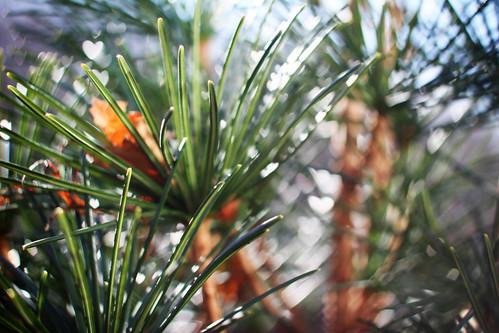 heart pine bokeh