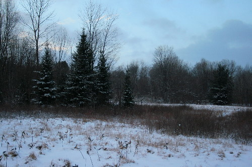 snow in the meadow