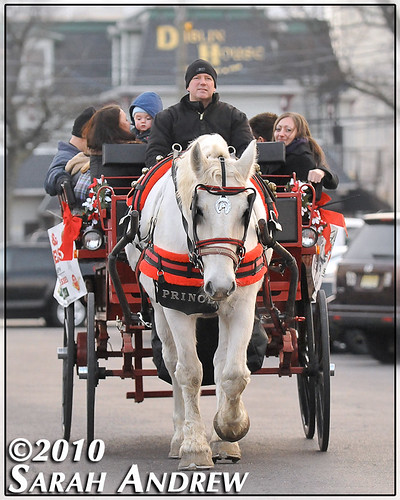Prince the horse treats tourists to a carriage ride through the streets of Red Bank, NJ