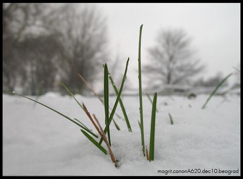 travcice u snegu