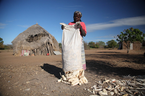 Smallholder maize farmer in southern Mozambique
