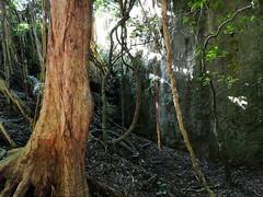詭異的樹根