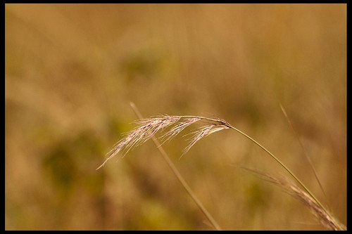 Grass by Sushil