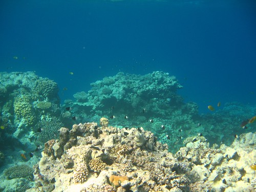 fish on coral