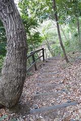 鴨居原市民の森(ナラの木坂、Kamoihara Community Woods)