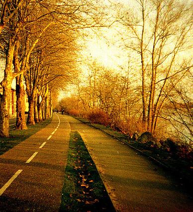 Осень вблизи Coueron в Pays-де-ла-Луар. Фото: Гильдас Maquaire