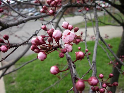 April 6 Flowers 001