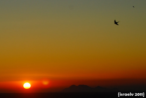 A swallow flies home by israelv