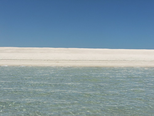 Wading In Shark Bay