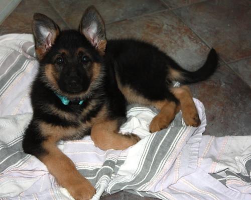 puppy  feb 2011 001