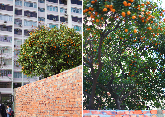 Kum-tree