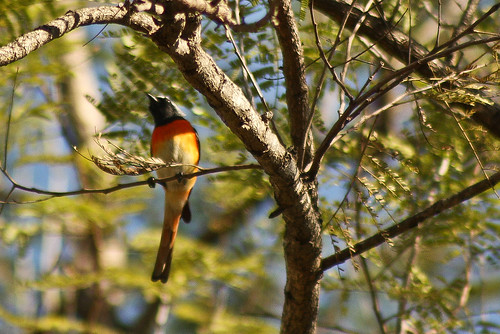 Small Minivet spotted at Valley School