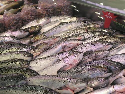 Pc1900130 Frische Fische - Fischmarkt Hamburg Altona - Bilder aus den Hamburger Bezirken und Stadtteilen  por christoph_bellin