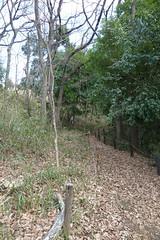鴨居原市民の森(タイヤ道、Kamoihara Community Woods)