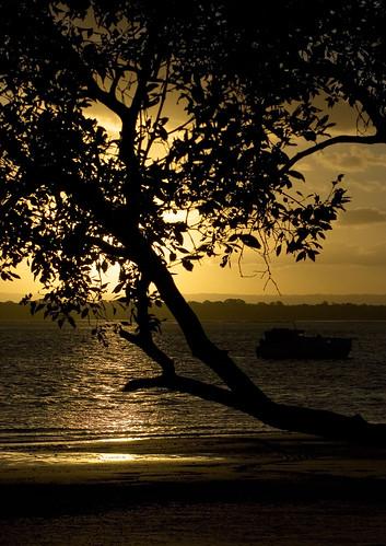 Banksia Beach Silhouette