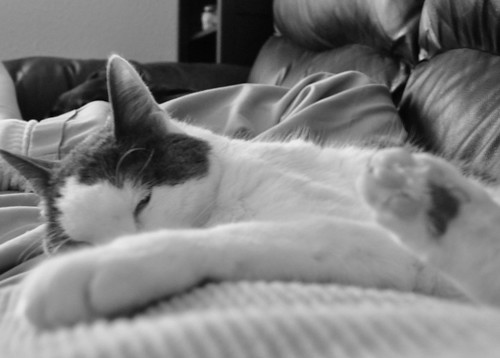 2011.02.13 Aremid on me on couch bw 1