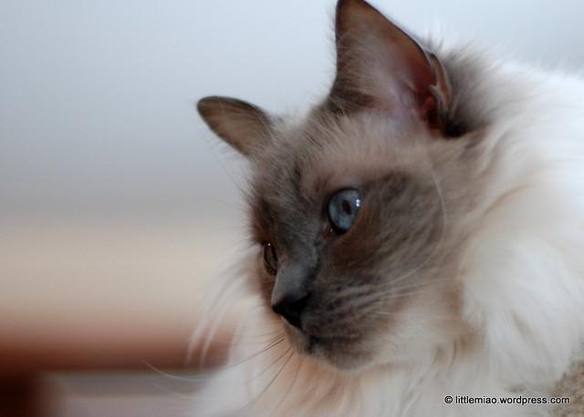 batcat, march 2011