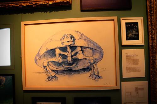 Drawings-Natural-History-Museum