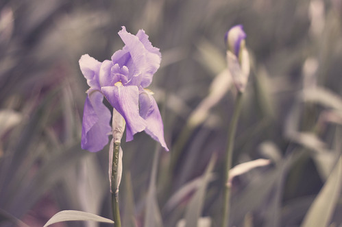 grace. by tumbleweed.in.eden