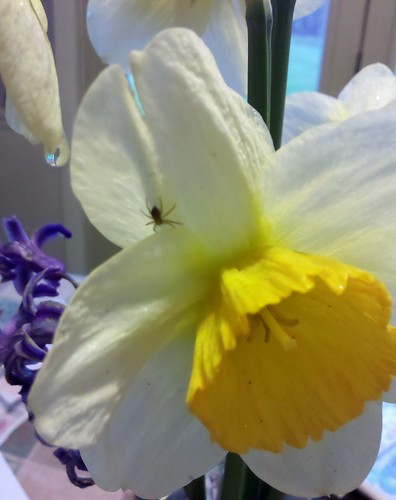 Easter morning flowers - and guest.