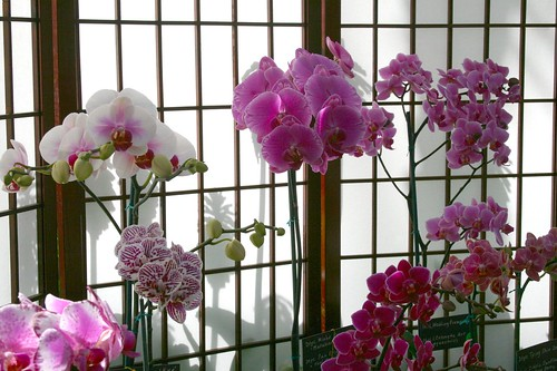 Orchids in front of a screen