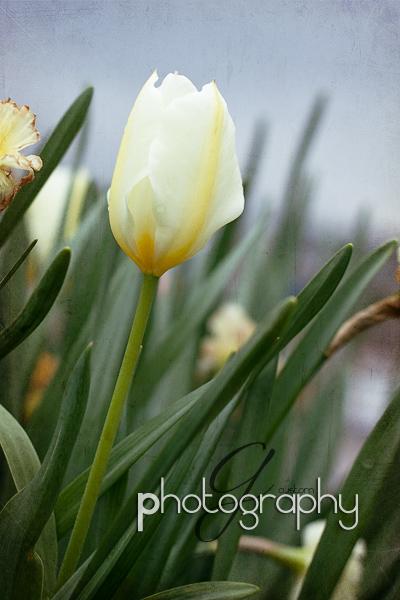 Apr022011_0017