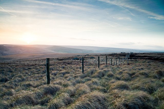 Fenced Off - Grass Tuffs On The Moor