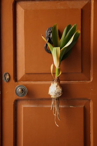 Tulip on a door
