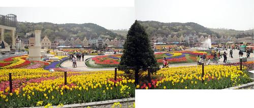 Everland's Tulip Festival