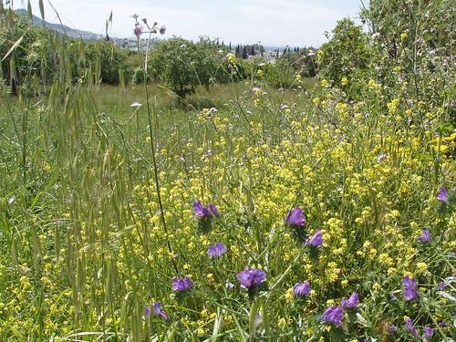 201104240057_wild-flowers