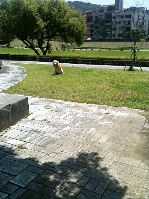 Naïve Oreo in the riverside park