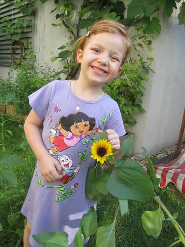 Sonnenblume Nr. 1 2011