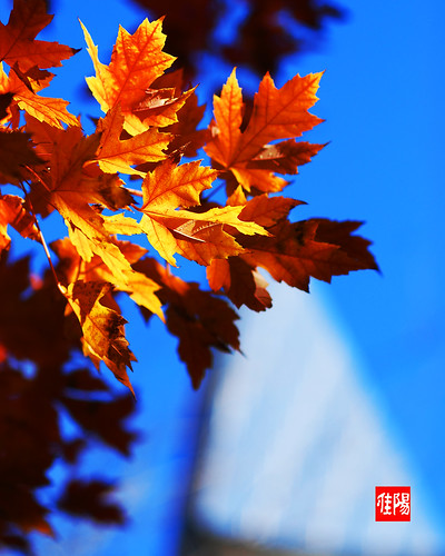 D80-CHI_AutumnLeaves08-2010_11-08B